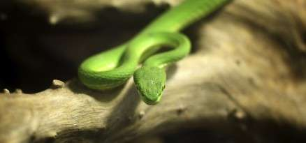 Snakes Are Illegal In New Zealand Knowledgenuts