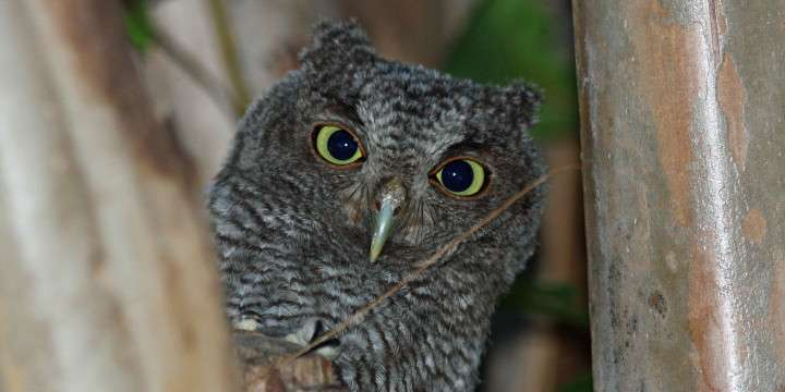 Owls Keep Little Snakes Amazing Facts