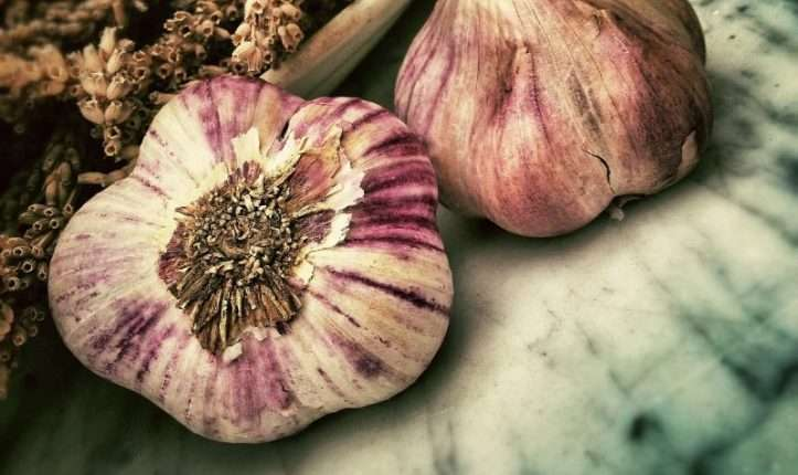 Difference between garlic and Death Cama